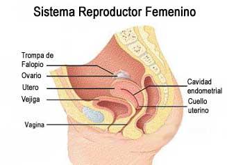 Quiste vaginal? - enfemeninocom